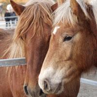 El saló Equus recupera l'espectacle nocturn de cavalls