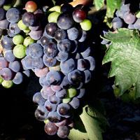 Joan Maria Romaní presenta el Diccionari del vi i del beure